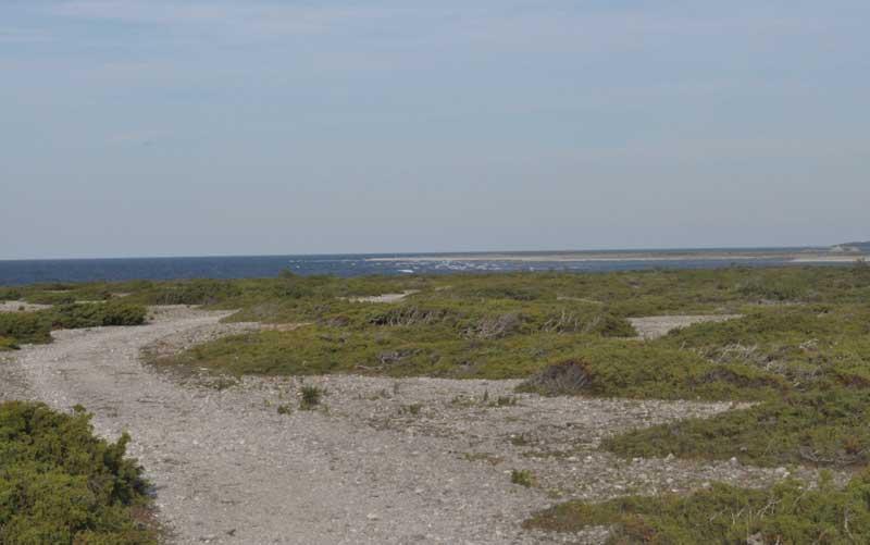 Enar och havet på Gotland